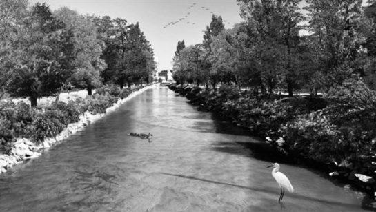 rio en madrid con aves