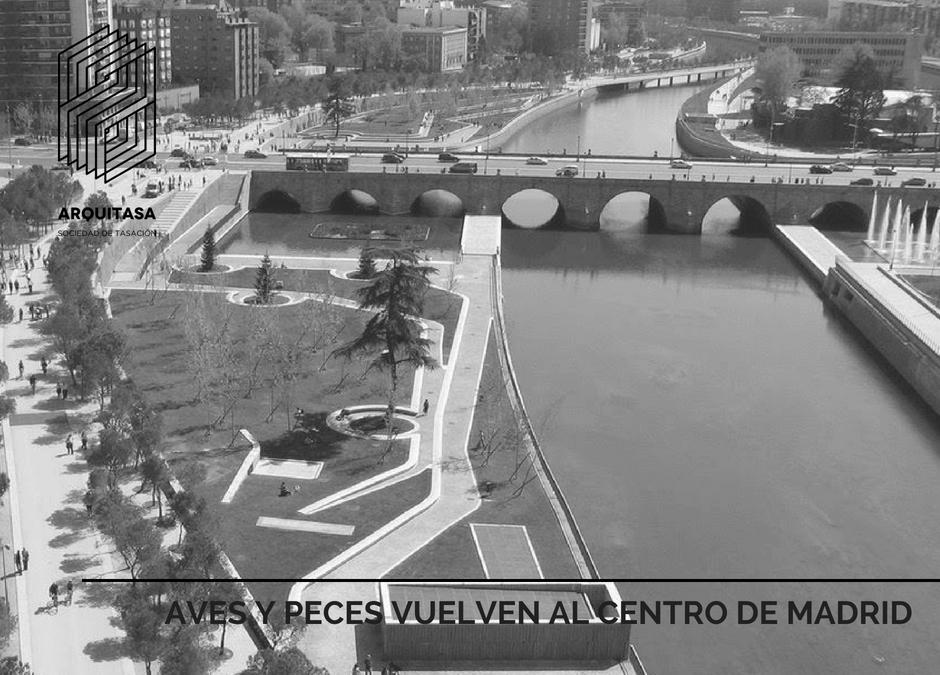 AVES Y PECES VUELVEN AL CENTRO DE MADRID.