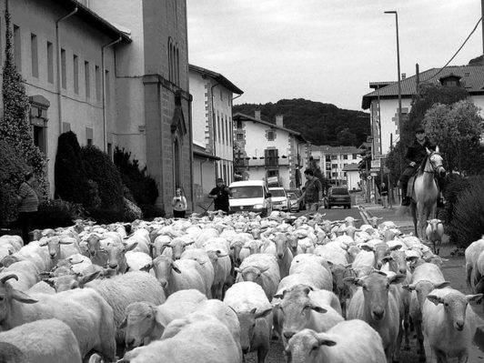 Trashumancia en contraste: el territorio urbano y las costumbres ancestrales