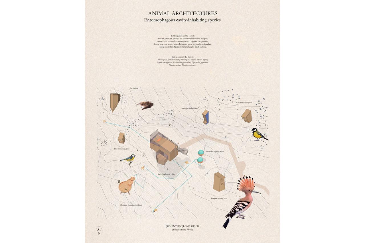 ilustración de arquitecturas para animales